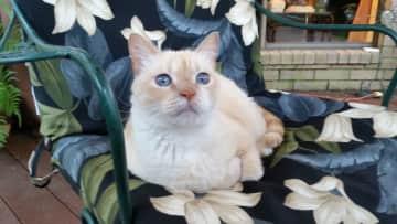 my cat Savannah