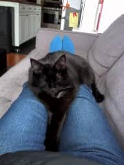 Catsit with Ability