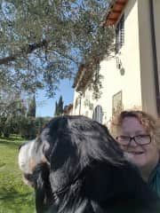 Big Baloo gorgeous Bernese Mountain dog I was lucky enough to care for in Tuscany
