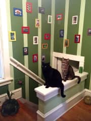 Mo (the black one) and Kuma, posing in one of their favorite spots.