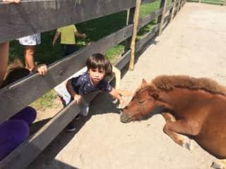 grandson with pony