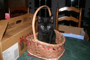 Holly kitten - Christmas 2011