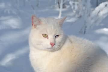 Meet 'Meow Meow'