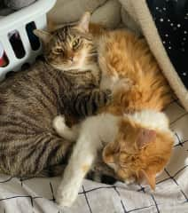 And I love my brother Malcolm. We give each other the lick of love