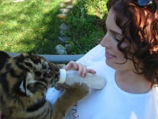 Okay, so this tiger cub is not a pet but I seem short of pics of me with cats! I met this beauty researching a novel that featured a big cat rescue group. (I used to volunteer as a cat socializer at the Glendale Humane Society.)