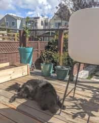 guarding the yard