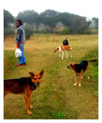 Wayne with our four stray doggies in Uruguay