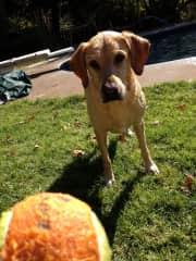 Jake is very ball focused