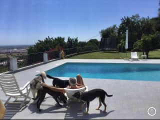 Housesitting 4 gorgeous dogs in Portugal