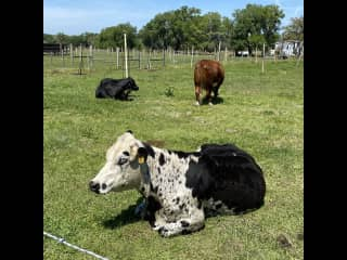 Love farm days