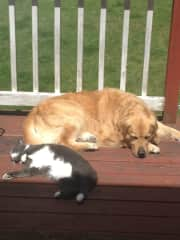 Our Jake& our Kitty (both since passed)