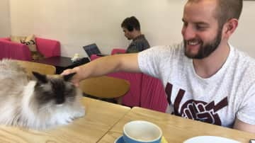Paddy with a member of staff at a Hong Kong cat cafe