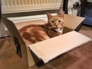 Pelham likes boxes