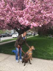 Nancy with Pablo and Max from our Brooklyn sit.
