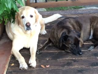 Marley and Charlie chilling on the patio