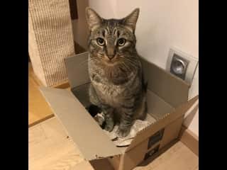 Filou in his favorite box