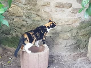 La Creuse village cat in my garden.