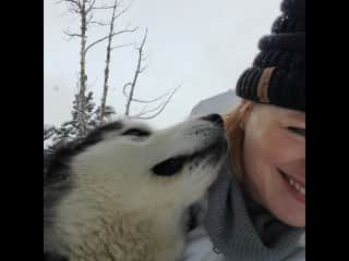 We went dog sledding in Colorado.