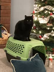 Mandy: IN the carrier?  No way!