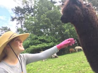 Gardening garb and a cheeky alpaca in New Zealand