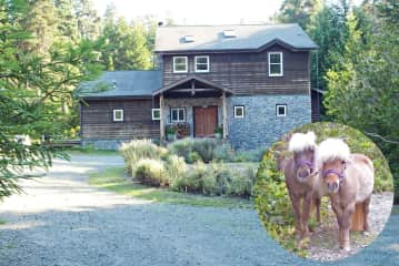 Mendocino Forest Retreat with Miniature Horses