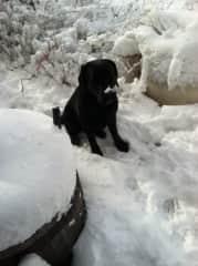Rachel - assistance dog in training