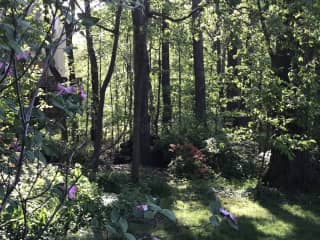 Our wooded back yard