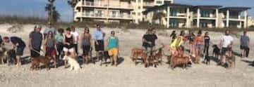 Beach walk in Florida with over 25 dogs.  I promise Judi is in   there!