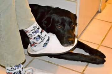 Bailey keeping my foot warm