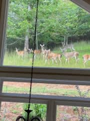 A herd of deer on the hillside behind the house.  Looking out the breakfast room window.  We have seen deer, fox, turkeys and even a bear on this hillside!