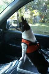 Prince is ready for Aunt Bev to take him on a joy ride!! Yippee!!!