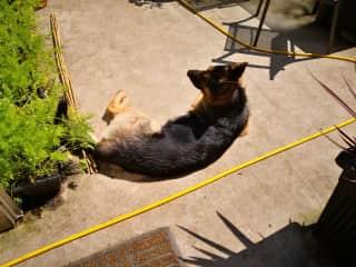 Max in the garden