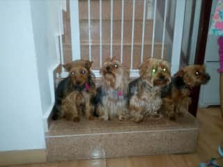 Rosie, Tilly, Coco and Rosie