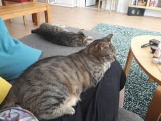 One cat on my lap and one right next to me. I think they liked me ;-)