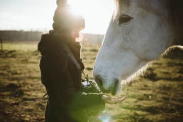 my and horse