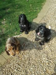 Teazle, Smudge and Boots