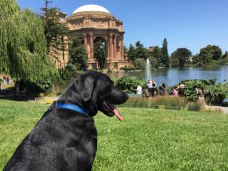 Butch takes in the sights in San Francisco