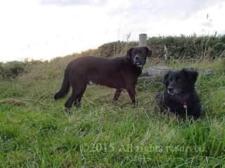 Wandering fields with Lucy & Joey