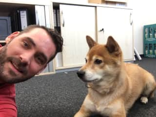 Mirko taking doggo to the office to sit him there