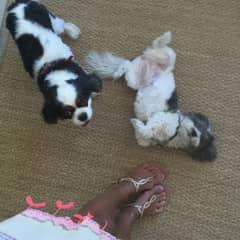 the dogs I take care in Miami