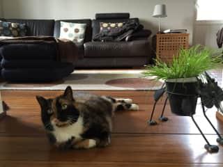 Tortellini and the cat plant pot