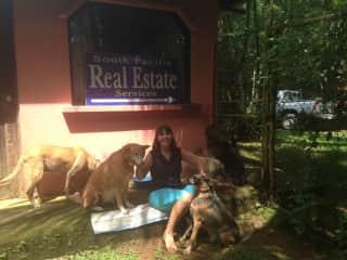 Costa Rican jungle dogs