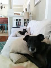 Spoiled cat and dog sitting on the couch.