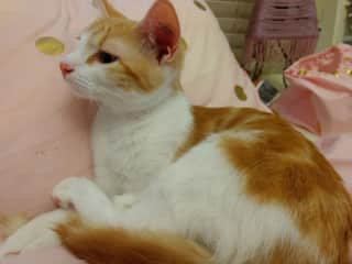 Lilly is very sweet. and very cuddly at night. Sometimes sleeps on bed. Is kept inside main home at night as does not get on with Mittens. LOVES food.