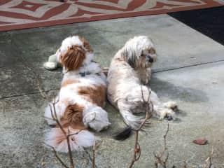 Maisie & Buddy; Friend