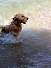 Ginebra loves the water as I do