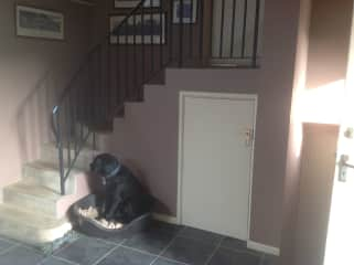 Dogs room & steps to flat