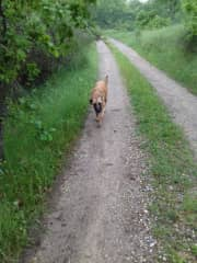 Walking Kahlua in Italy May 2018