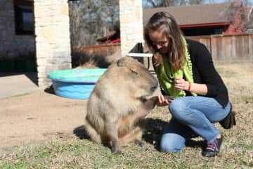 We love taking care of all animals. Even capybaras!