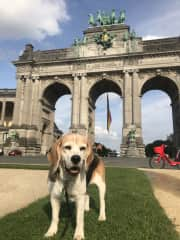 My first pet friend from THS - Spice in Brussels